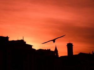 foto di tramonto tramonto Incontro al tramonto in riva al fiume Arno a Firenze